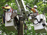 Linemen Working in a Tree
